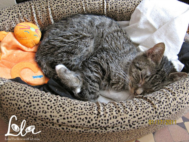 cat sleeping in bed|rescued cat