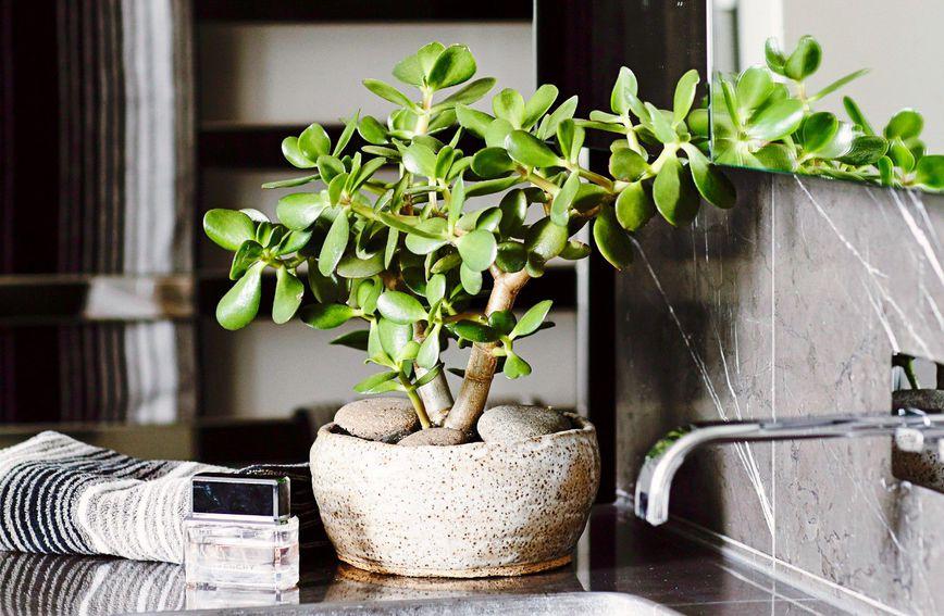 biljke-drvo-žada-cvijeće