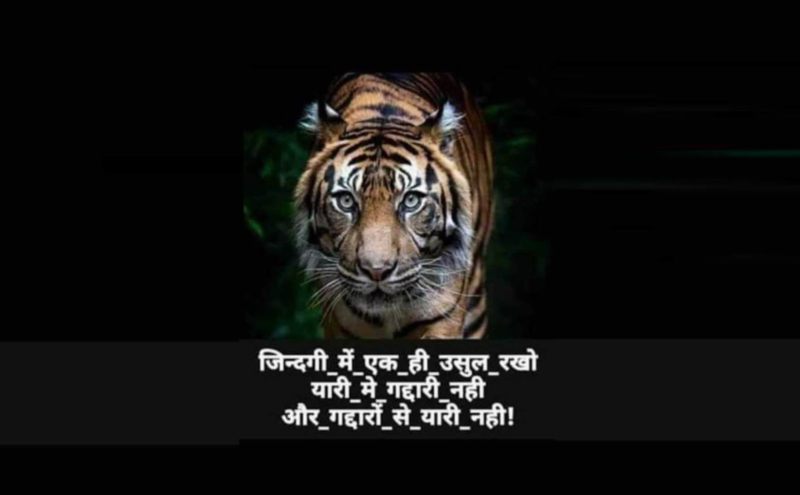 Tiger Like Attitude Shayari for Boys in Hindi
