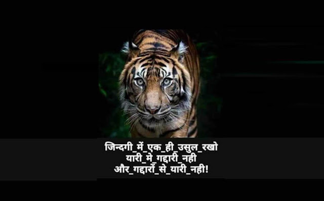 attitude tiger like whatsapp shayari