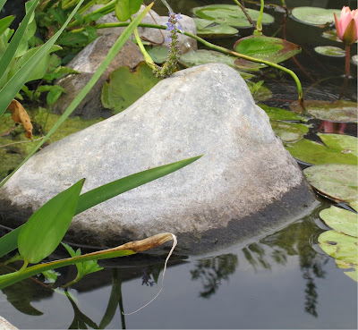 detecting a leak in  your pond measuring your water loss