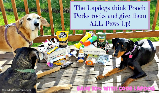 The Lapdogs think #PoochPerks rocks and give them ALL PAWS UP! #subscriptionbox #rescuedog #adoptdontshop #dogs #LapdogCreations ©LapdogCreations