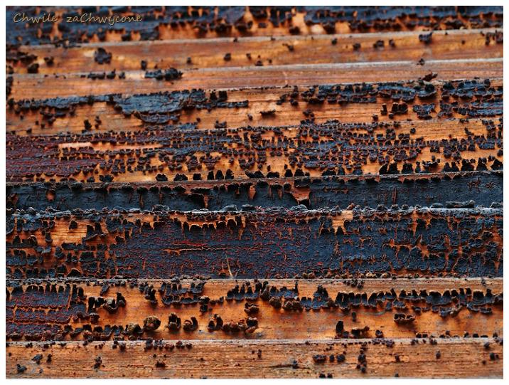 drewniane żaluzje, złuszczona farba na drewnie