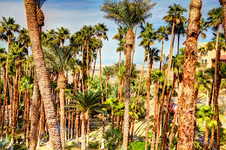 Palm trees line the grounds at the Inn at Furnace Creek, Death Valley, California
