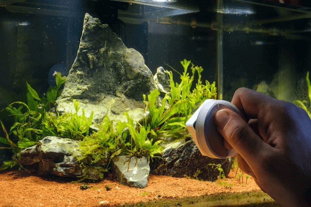 Dealing With Algae in Your Aquarium