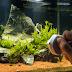 Dealing With Algae in Your Aquarium