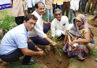 Ashoka Foundation's Planting Campaign Initiative   alwar   alwar Rajasthan   Alwar Latest News 