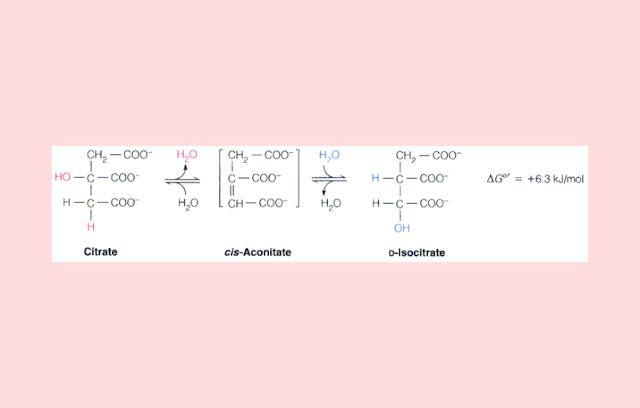 Isomerase Sitrat