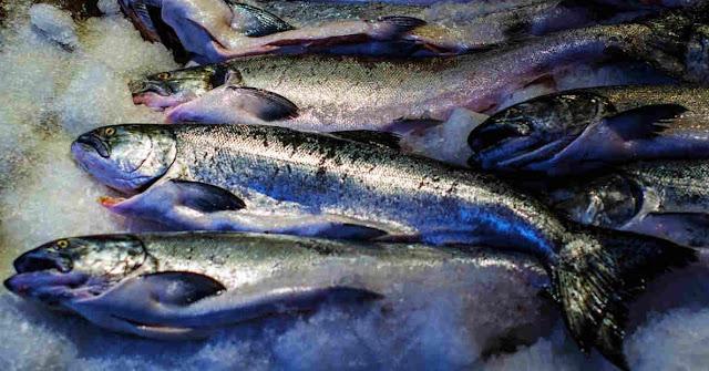 Pembekuan Ikan