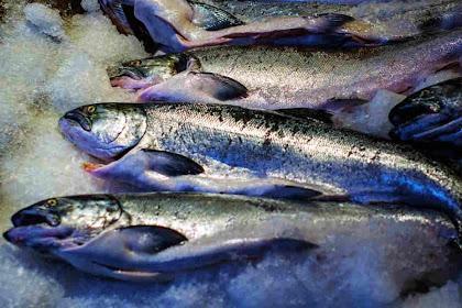 Pengenalan Thermal Arrest Time dalam Pembekuan Ikan