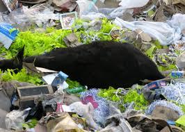 cow death by plastic polythin