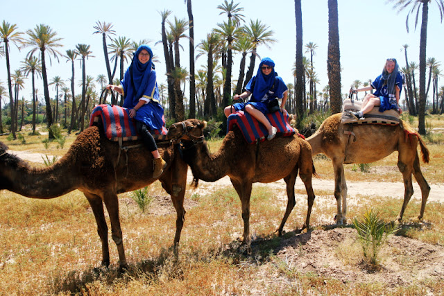 Camels in Marrakech, Morocco