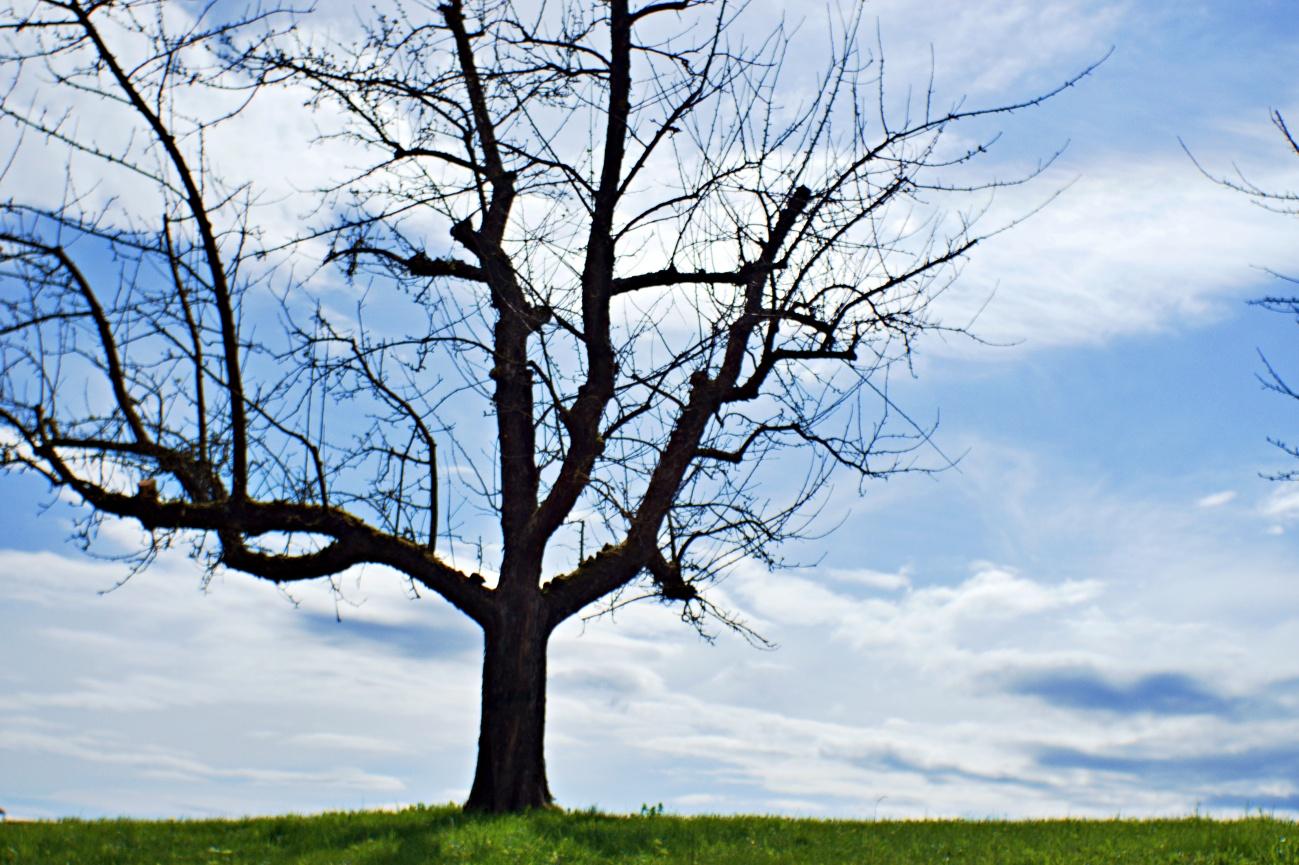 Zum Tagesabschluss: Typischer schwäbischer Streuobstbaum - 55€ Altglasausrüstung #12