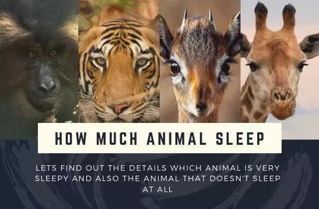 How much Animals Sleep During a day?