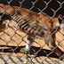 Animais comem uns aos outros e são comidos por pessoas em zoológico na Venezuela