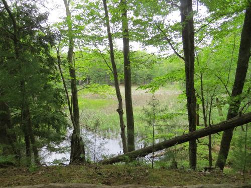 wetland view