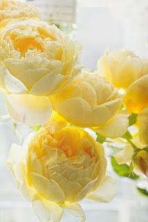 ranunculos-de-petalos-amarillos