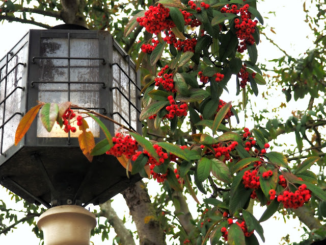 berries and lamppost