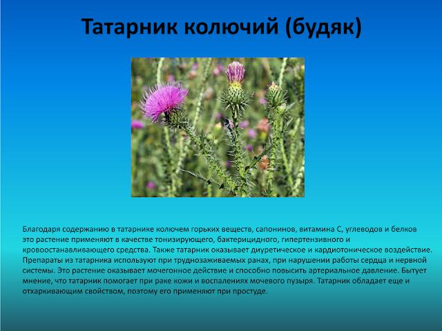 лекарственные и съедобные растения презентация