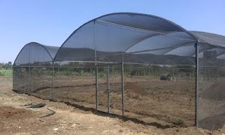Shade net house in Kenya