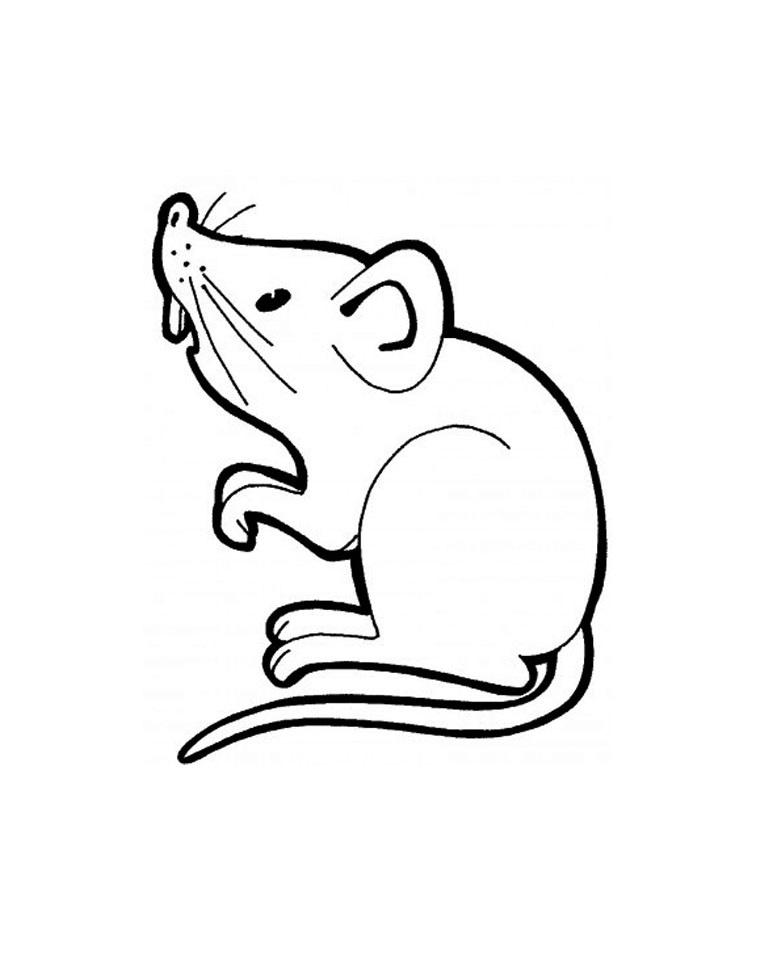 Tranh tô màu con chuột đang đứng