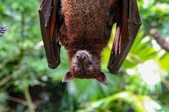 13 Asome Bat Facts|Life Cycle|Food habits