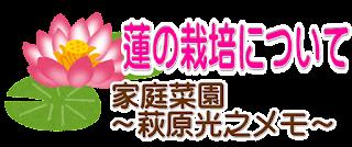蓮の栽培方法