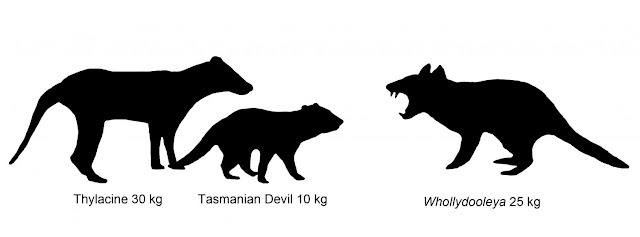 New species of extinct carnivorous marsupial discovered in Australia