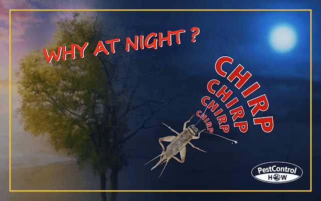 why-do-crickets-chirp-at-night