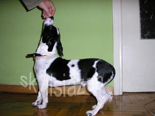 εκπαίδευση σκύλων κάτσε 2