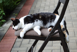Kitty the cat resting on a chair