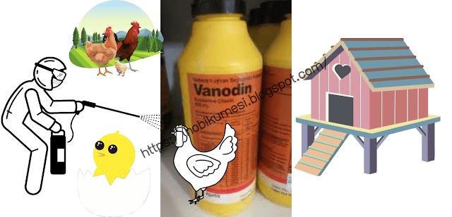 Tavuklarda Vanodin Kullanımı