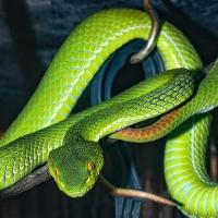 Snake information in hindi / साँपो के रोचक तथ्य