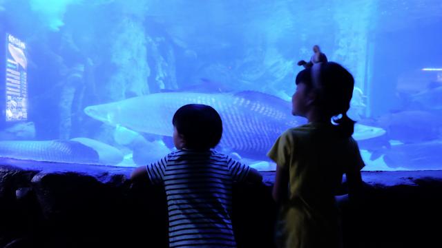 apakah anak anak dibawah usia 9 tahun boleh ke seaworld