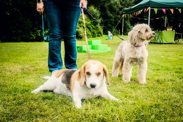 Beagle and Tibetan terrier taken with Fuji X70