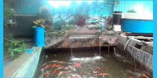 Budidaya Ikan Koi di masa Pandemi Corona