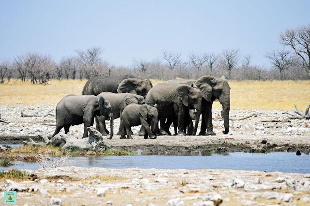 Elefantes en Parque Nacional de Etosha, Namibia