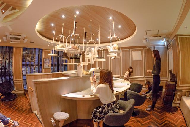 Restaurant business concept