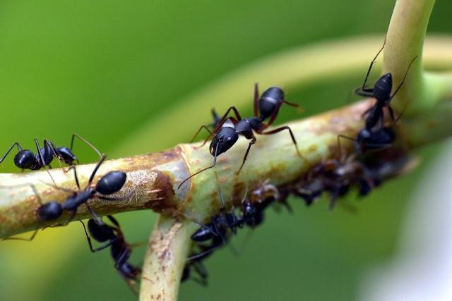 النمل،النمل الأبيض،مكافحة النمل الأبيض،النمل الأسود،النمل الأحمر،تزاوج النمل،النمل الطائر،النمل الأبيض الطائر،انتشار النمل،بيض النمل،ملكة النمل،أضرار النمل الأبيض،أعشاش النمل،طعام النمل،أهمية النمل