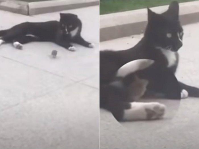 Mirip Tom and Jerry, Kucing dan Tikus Ini Malah Pelukan Setelah Capek Kejar-kejaran