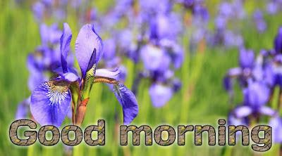 Good morning Rose images HD