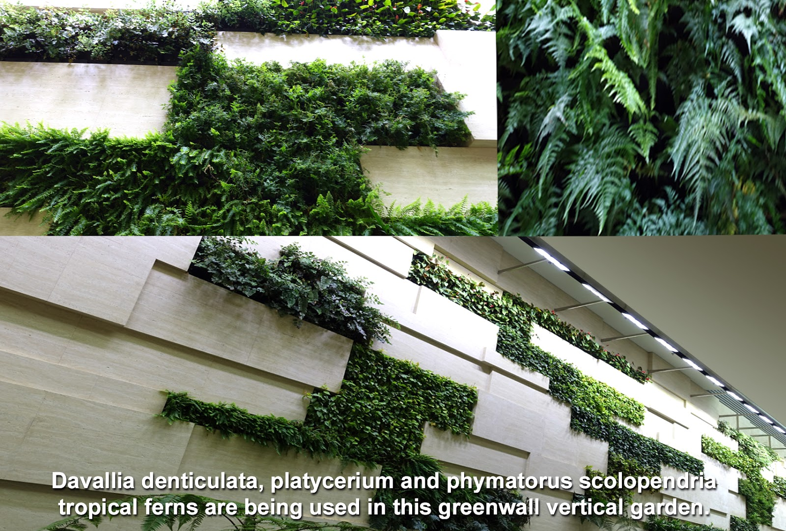 Horizontal Cluster Planting On Vertical Such As The One Above Can Produce  Interesting Garden On The Wall Design ...