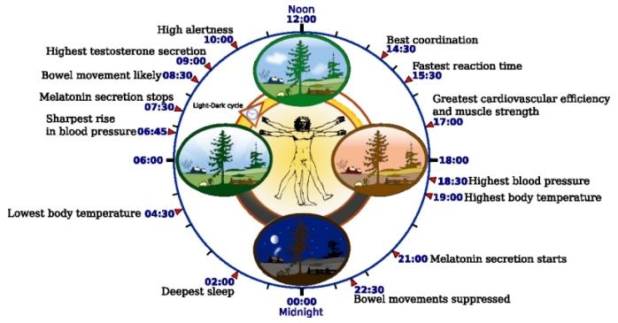 Fakta menarik mengenai aturan jam biologi badan manusia.