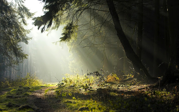 Nature Desktop Backgrounds Night Forest