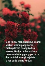Gambar Bunga Mawar Merah Buat Quotes