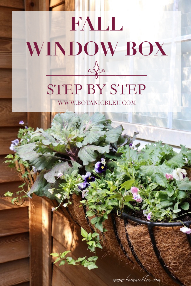 DIY French inspired fall window box basket uses cool weather pansies ivy ornamental kale