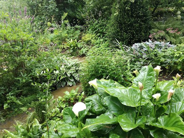 Water Garden, ogród w cieniu
