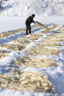 コウゾ雪ざらし 山中和紙