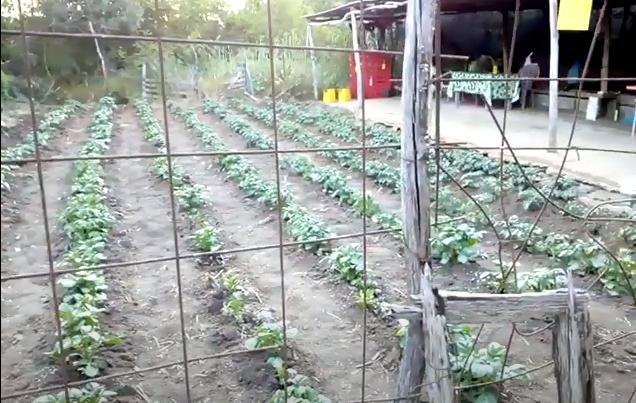 Ο κήπος μας για το 2020 video