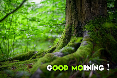 21+ amazing good morning images hd